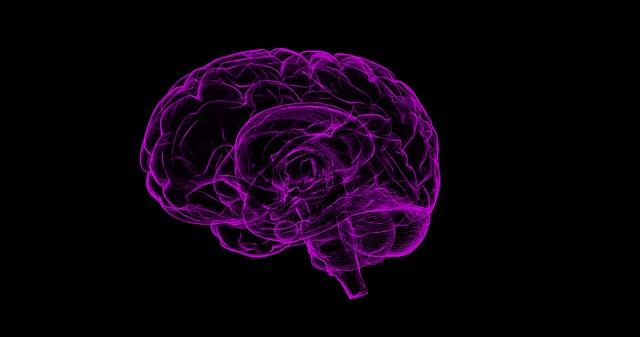 lidský mozek.jpg